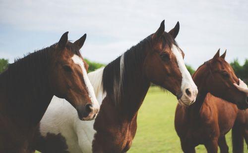 Competizione internazionale Monta Western I American Quarter Horse