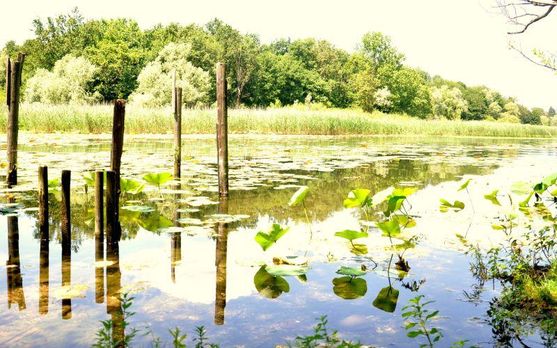 L'Isola del lago