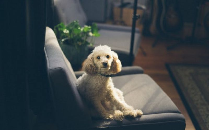 FREE ACCOMODATION FOR YOUR PET FRIENDS IN VARESE
