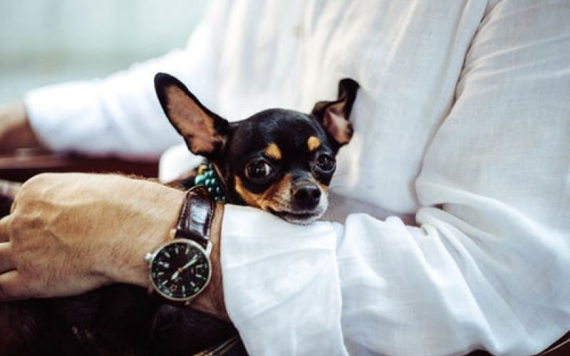 PET FRIENDLY HOLIDAY – FROM €90