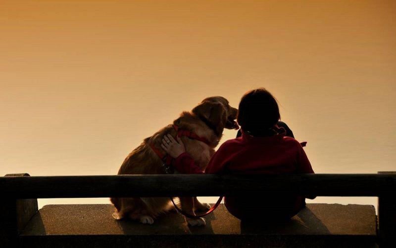 SERVIZIO DOG SITTING - Varese Dogs City Park